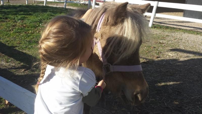 KZS in KK Karlo Maribor - 300 otrok na konja